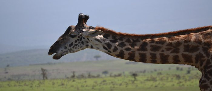 13 Days East Africa Highlights Expedition