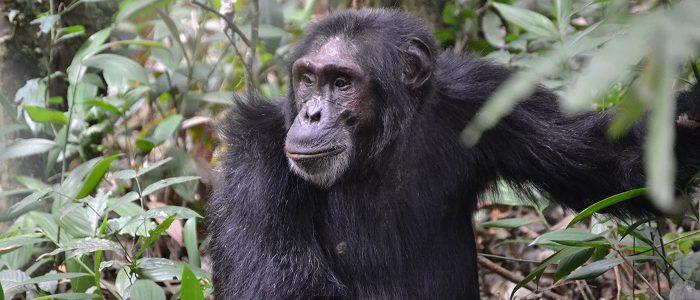 4 Days Rwanda Primates Safari