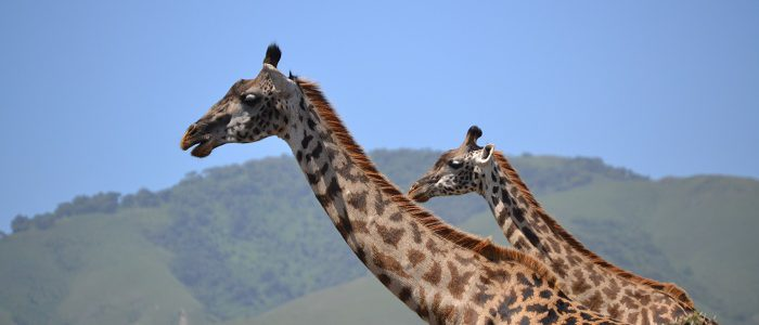 6 Days Ngorongoro