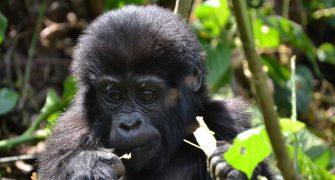 2 Days Mount Bisoke Hike Rwanda