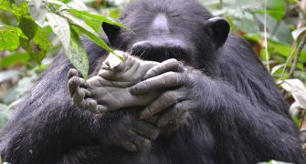 10 Days Best of Uganda Safari