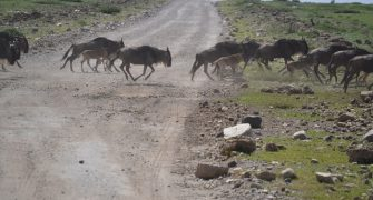 12 Days Tanzania Wildebeest Migration Safari