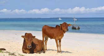 5 Days Zanzibar Cultural Package