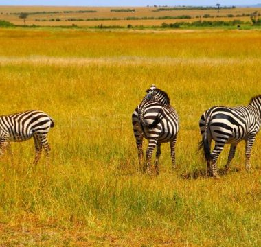Uganda Among Top 5 Tourist destinations 2017