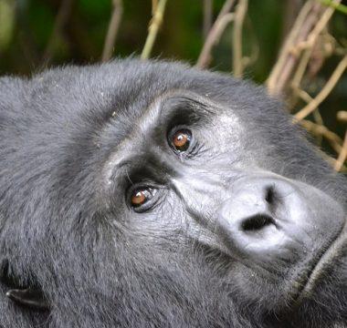 8 Days Uganda Rwanda Combined Safari