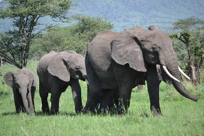 9 Days Serengeti