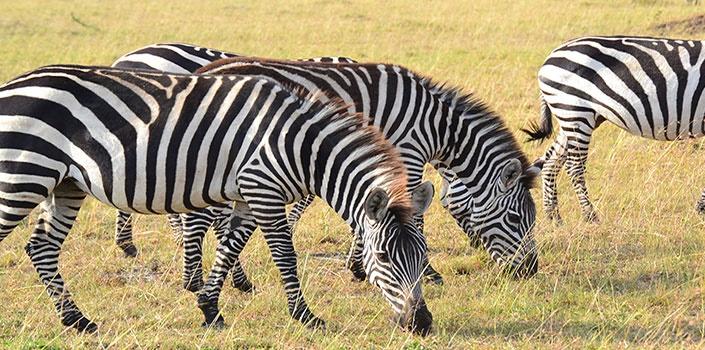 6 Days Kenya Rift Valley Explorer Safari