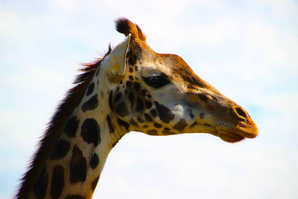 5 Days Kidepo Fly In Wildlife Safari
