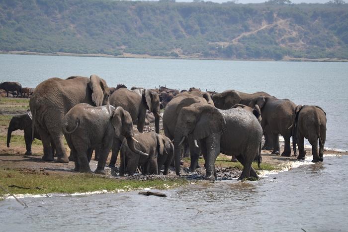 6 Days Uganda Gorillas and Wildlife
