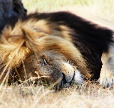 5 Days Kenya Escapade Safari Tour
