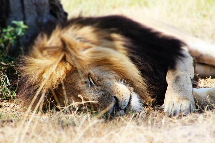 5 Days Kenya Escapade Safari Tour
