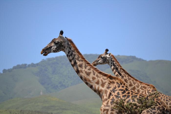 6 Days Ngorongoro