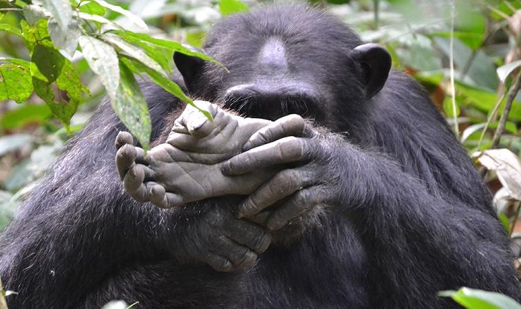 10 Days Best of Uganda Safari